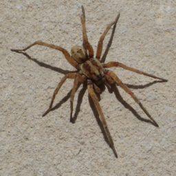 Уничтожение пауков в Старом Осколе
